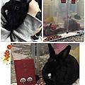 暖暖 - 基隆暖暖空屋車底棄兔