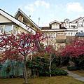 【南投清境】被一座櫻花林包圍的民宿~清境嵐山小鎮民宿