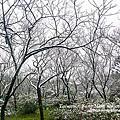 1050124陽明山雪景