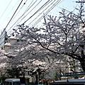 2010/4/4~4/9 東京生活心體驗