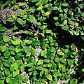 2007_12_16古堡花園