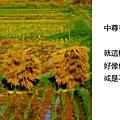 2010_10_29_03輕描淡寫中尊寺