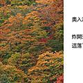 2010_10_26_01置身畫中奧入瀨
