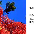 2010_10_29_02期間限定毛越寺