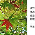 2010_10_25_02一抹秋紅中野神社