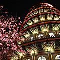 2014天元宮夜櫻