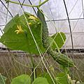 20060422-0423苗栗油桐花之旅