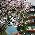 櫻花杜鵑元天宮
