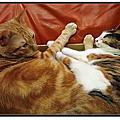 兩貓同一窩