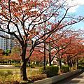 東京日常生活