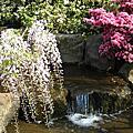 足利藤花園