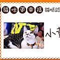 20110724貓貓認養會