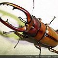 東埔3D蟲蟲電影