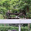 木柵動物園貓熊館張貼隔熱紙工程