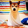 小歐家的狗~~