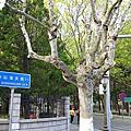 2015山東