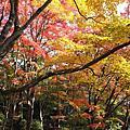 2010京都紅葉