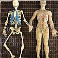 人體鍛鍊教練/身心靈探索者