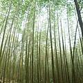 2009台中新社+八仙山