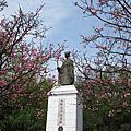 20170330~3 櫻花大爆發之陽明山杜鵑花茶園~陽明公園~湖山綠地