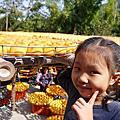 20131026新埔曬柿餅