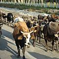 2011 北疆之旅