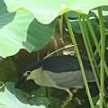 2014. 5. 12 植物園夏荷