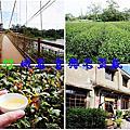 新竹 峨眉富興老茶廠