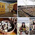 台中 新社百菇莊