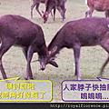 20151005_JP_京阪奈自助_奈良公園