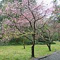 20100116福山植物園