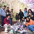 武陵的櫻花