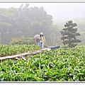 2012踩春-海芋+士林官邸+圓山下午茶