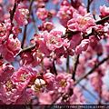 2013/03/03 北九州Day4 柳川,太宰府