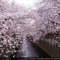 2016 櫻 東京