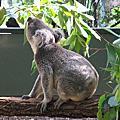 2010 Dec Brisbane Day 3
