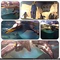 屏東。國立海洋生物博物館