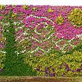 大安森林公園-梵谷畫作綠牆