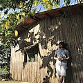 Premiere Note Mimosa Austral 細雨含羞