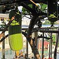 2010.11.30 空中菜園