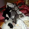 20120215新屋中途四小貓