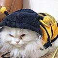 我的超可愛貓咪~~摩卡卡