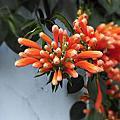 美麗的、不知名的、盛開的花
