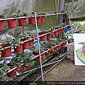 1040208內湖採草莓