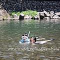 11七月。秋川橋河川公園玩水樂