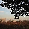 20100119大阪城公園