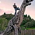 朽木可雕也
