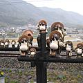 2006日本賞櫻之旅-嵐山