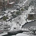 家裡小區的雪景@shanghai
