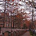 桃園--木棉花